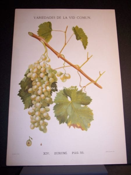 Rare Wine Chromolithograph p55 Zuruml. $450.