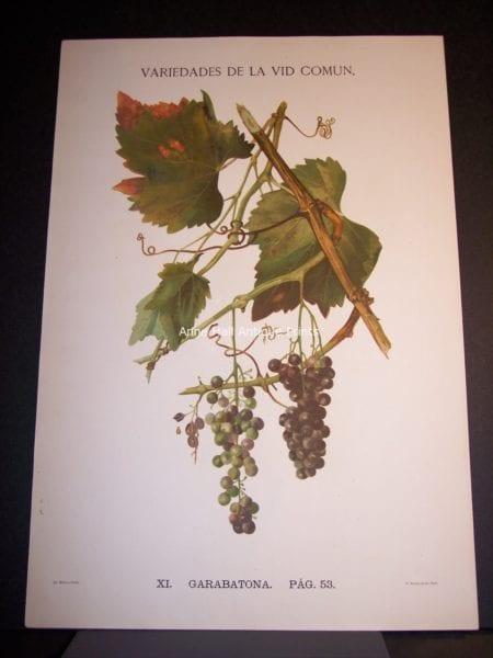 Rare Wine Chromolithograph p53 Garabatona. $450.