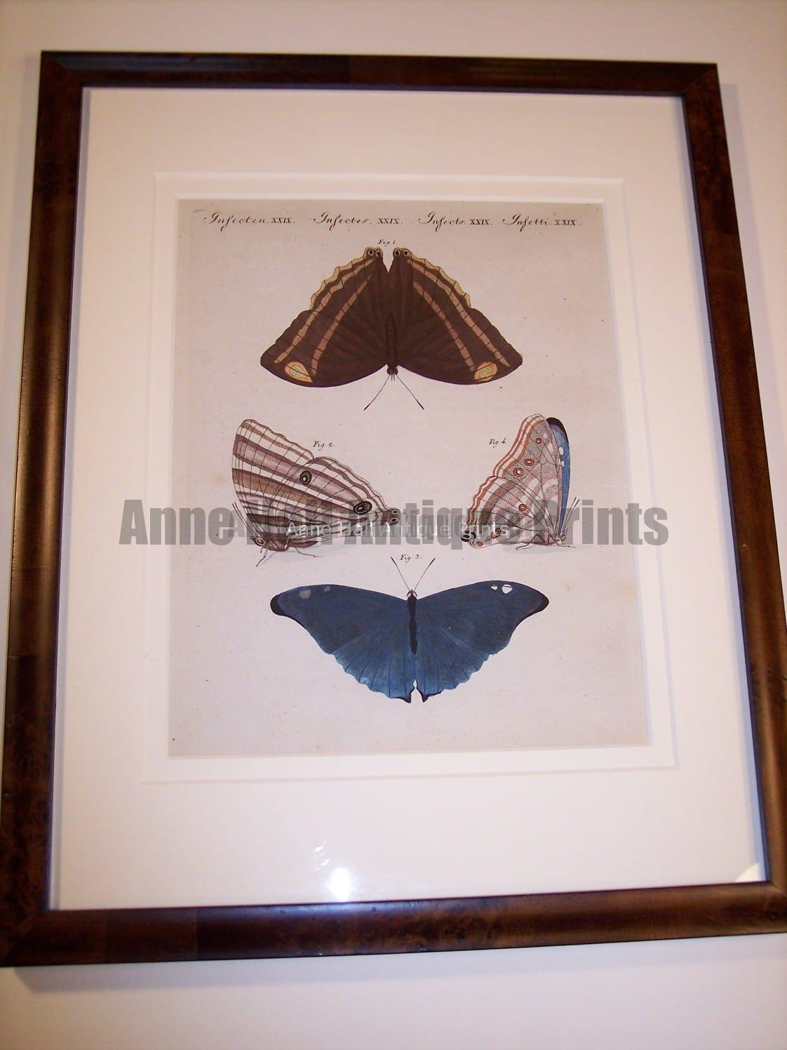 Hand colored butterfly engraving 76