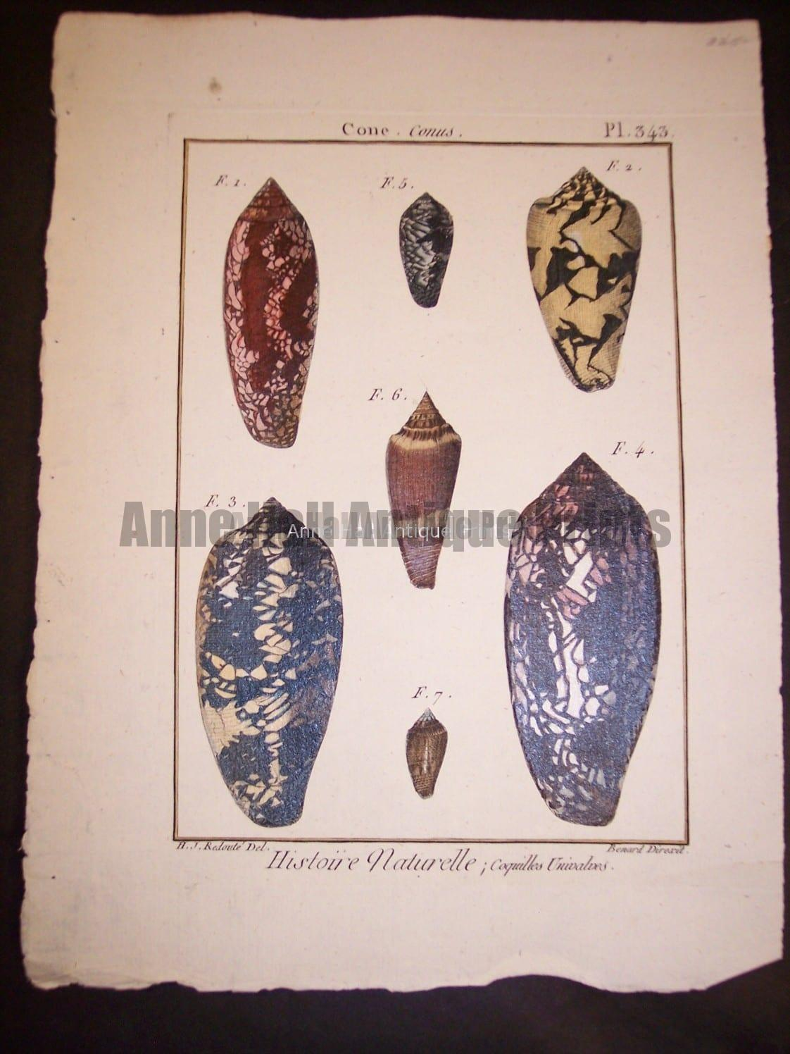 "These old sea shell prints date from 1779 to 1820. They were published by Lamarck in France. Numerous well known artists worked on this series including Marachel and PJ Redoute. These are stunning old copper plate engravings with water colors. They range in price from 125. to 225. each. and a discount on a set. Each print measures about 8x11"" These are stunning old copper plate engravings with water colors."