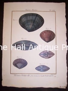 """These old sea shell prints date from 1779 to 1820. They were published by Lamarck in France. Numerous well known artists worked on this series including Marachel and PJ Redoute. These are stunning old copper plate engravings with water colors. They range in price from 125. to 225. each. and a discount on a set. Each print measures about 8x11"""" These are stunning old copper plate engravings with water colors."""
