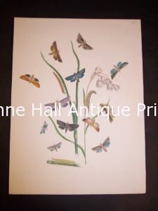 Humphrey Butterflies and Moths PL 47, 1865. $50.