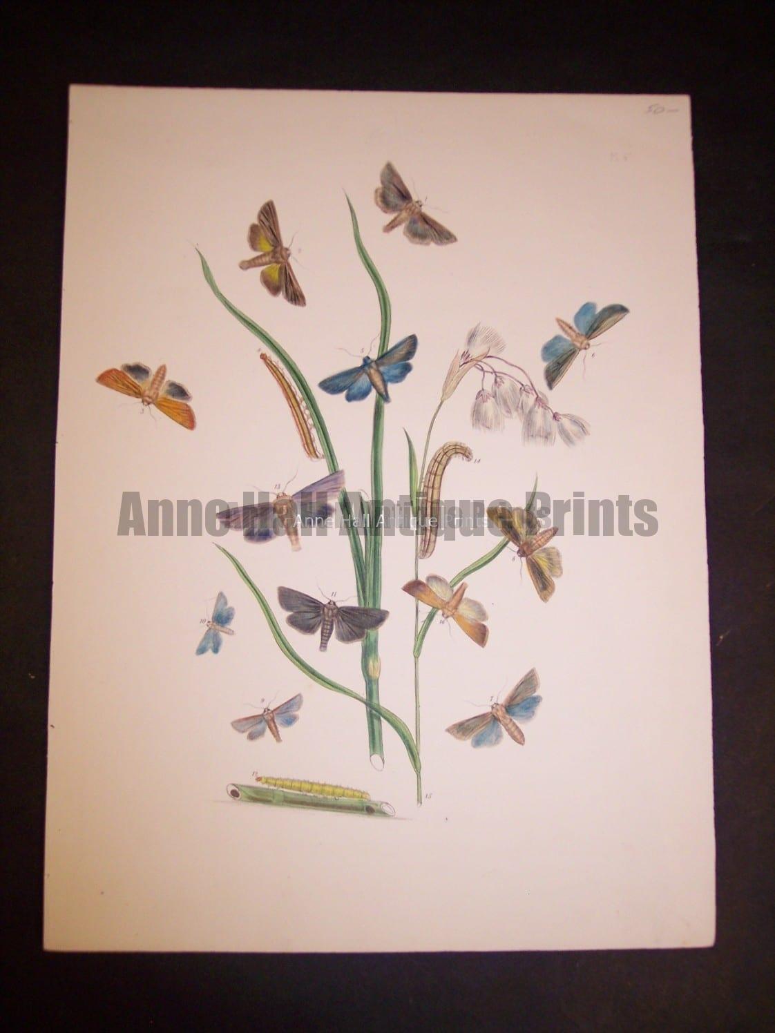 Humphrey Butterflies and Moths PL 47, 1865. $50.