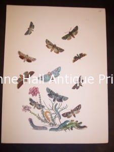 Humphrey Butterflies and Moths PL 39, 1865. $50.
