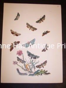 Humphrey Butterflies and Moths PL 39, 1865. $50.