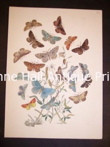 Humphrey Butterflies and Moths PL 60, 1865. $50.