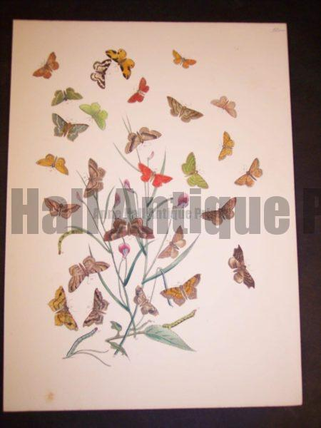 Humphrey Butterflies and Moths PL 73, 1865. $50.