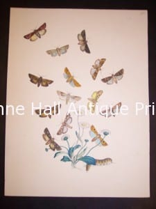 Humphrey Butterflies and Moths PL 24, 1865. $50.