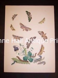 Humphrey Butterflies and Moths PL 40, 1865. $50.