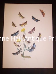 Humphrey Butterflies and Moths PL 23, 1865. $50.