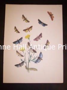 Humphrey Butterflies and Moths PL 23, 1865. $50.