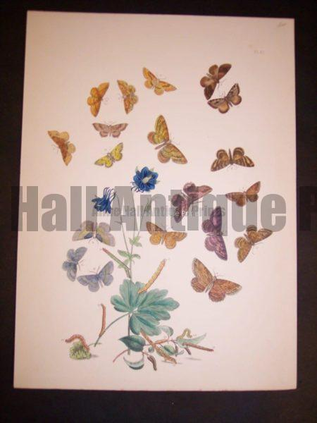 Humphrey Butterflies and Moths PL 61, 1865. $50.