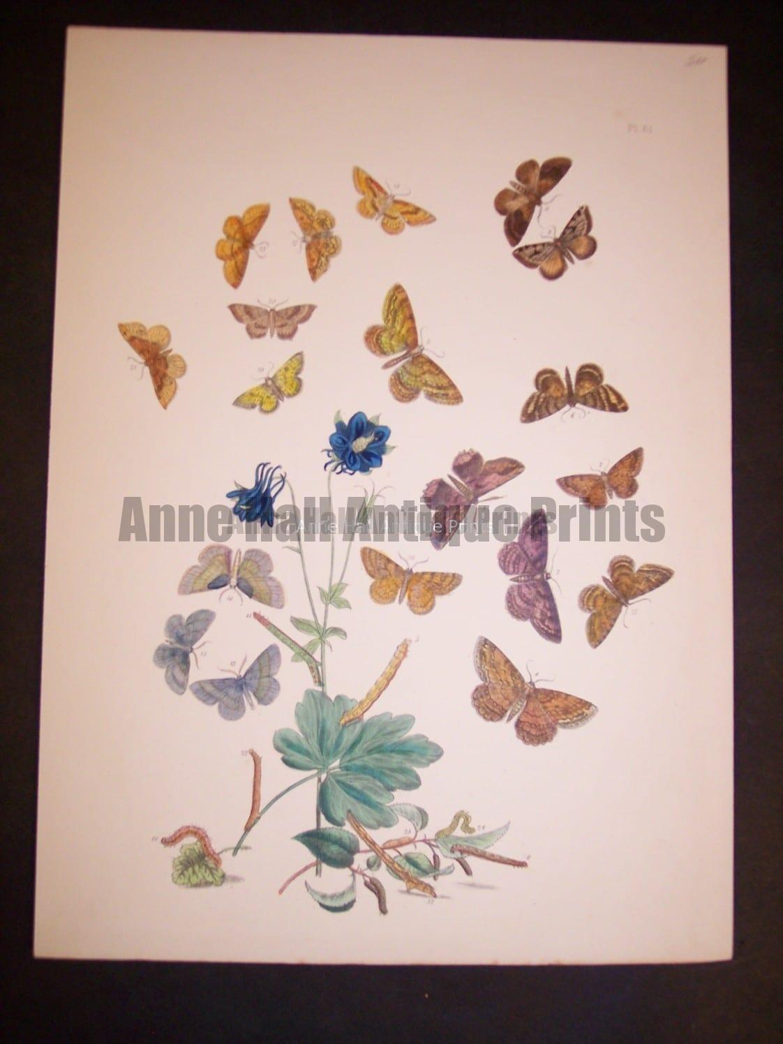 Humphrey Butterflies and Moths PL 61, 1865. $50.