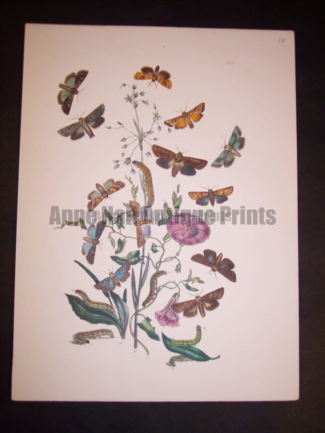 Humphrey Butterflies and Moths PL 29, 1865. $50.