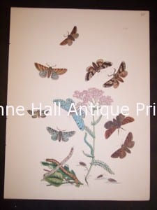 Humphrey Butterflies and Moths PL 58, 1865. $50.