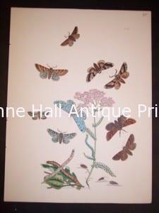 Humphrey Butterflies and Moths PL 58, 1865. $50.