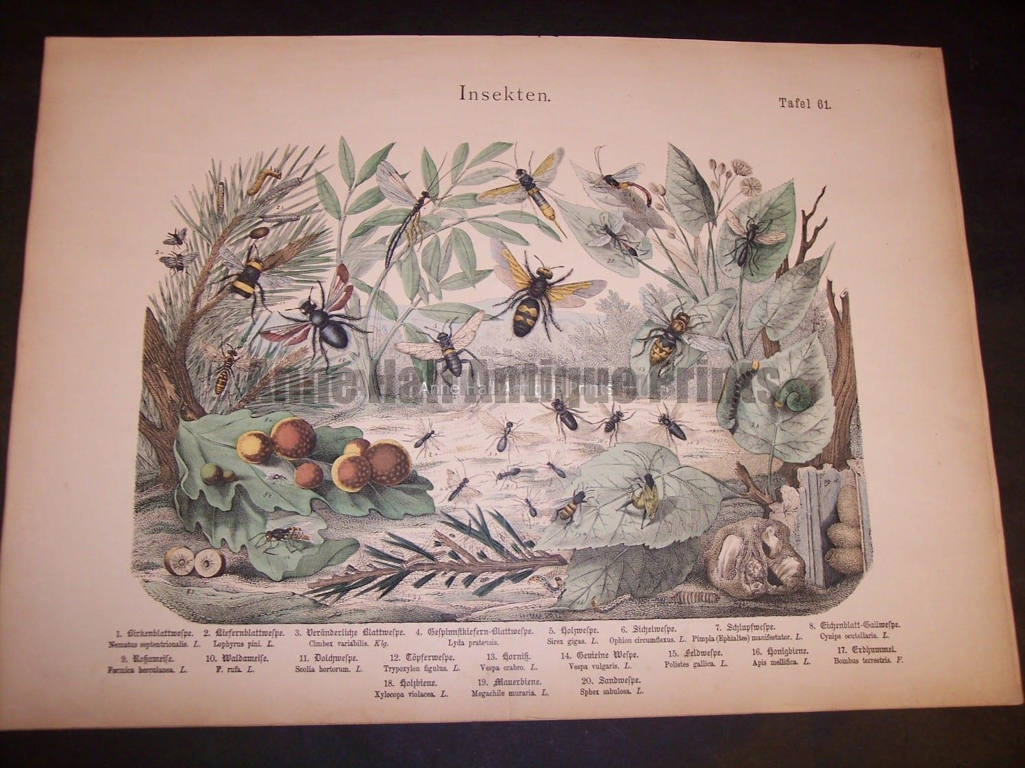 Shubert insects