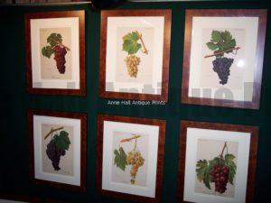 wine lithographs, framed.