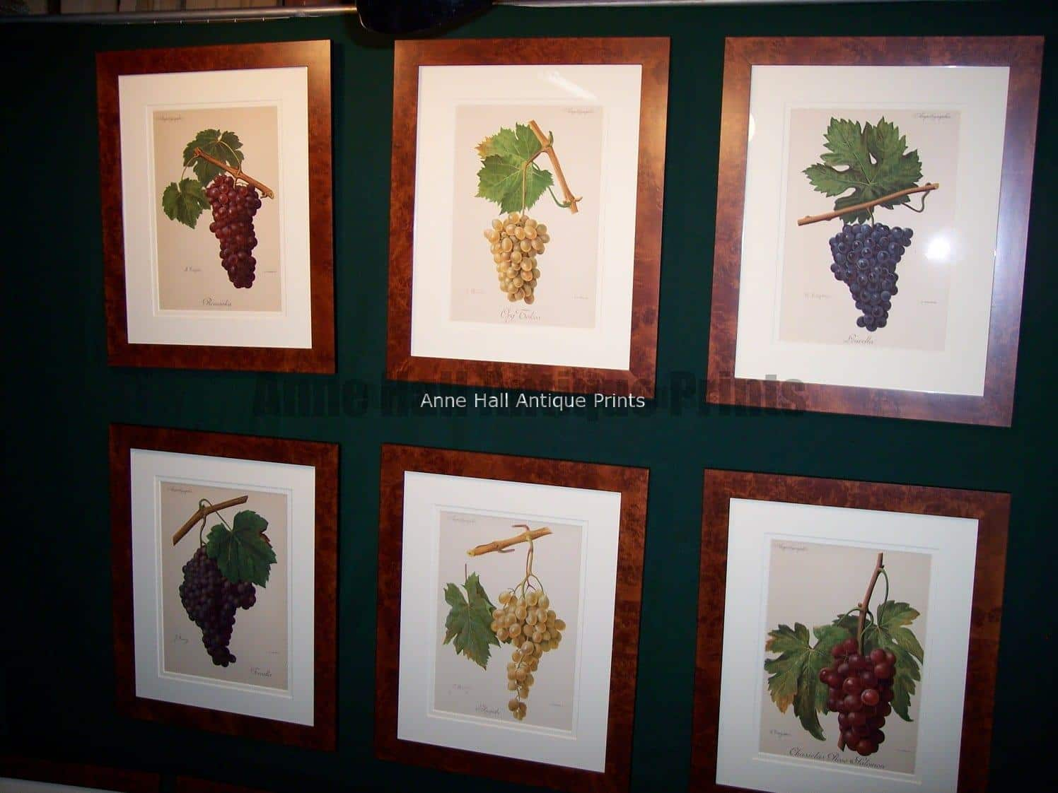 Wine Chromolithographs Ampelographie. Grouping of six wine grape chromolithographs from 1897. 9473