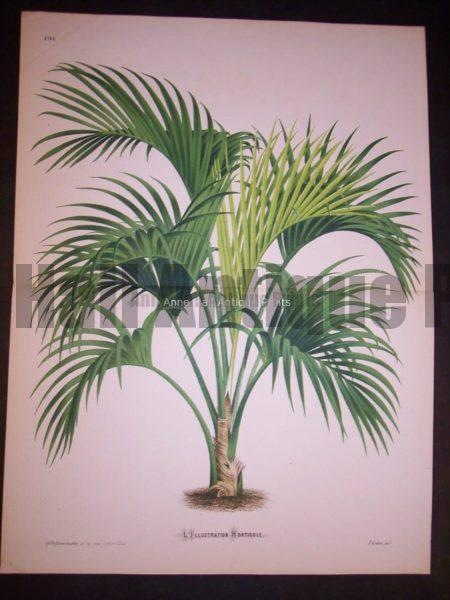 Palm Tree Print PL 191