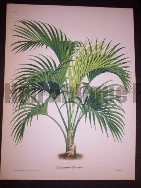 Palm Tree Print PL 191