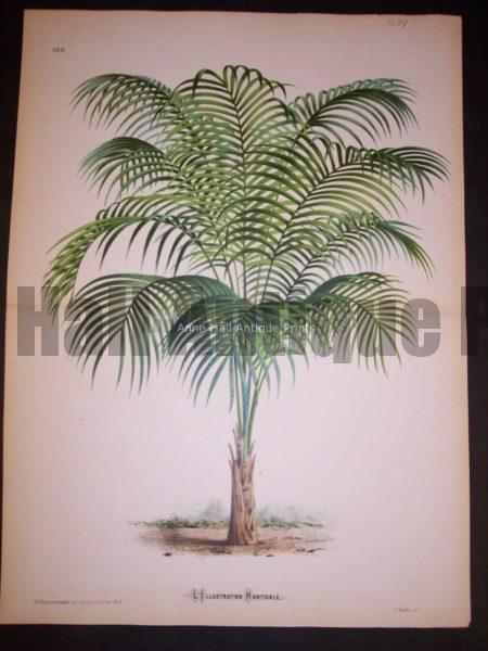 Palm Tree PL 169