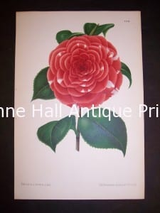 only 85. each. Stunning camellia colors and great condition.