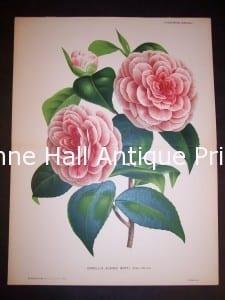 Fancy Flower 9542 Camellias 300.