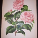 Fancy Flower Camellias 9544 250.