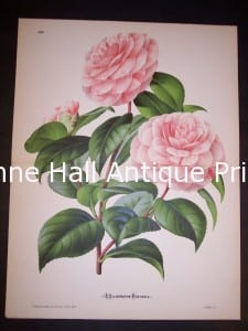 Fancy Flower Camellias 9544 250.
