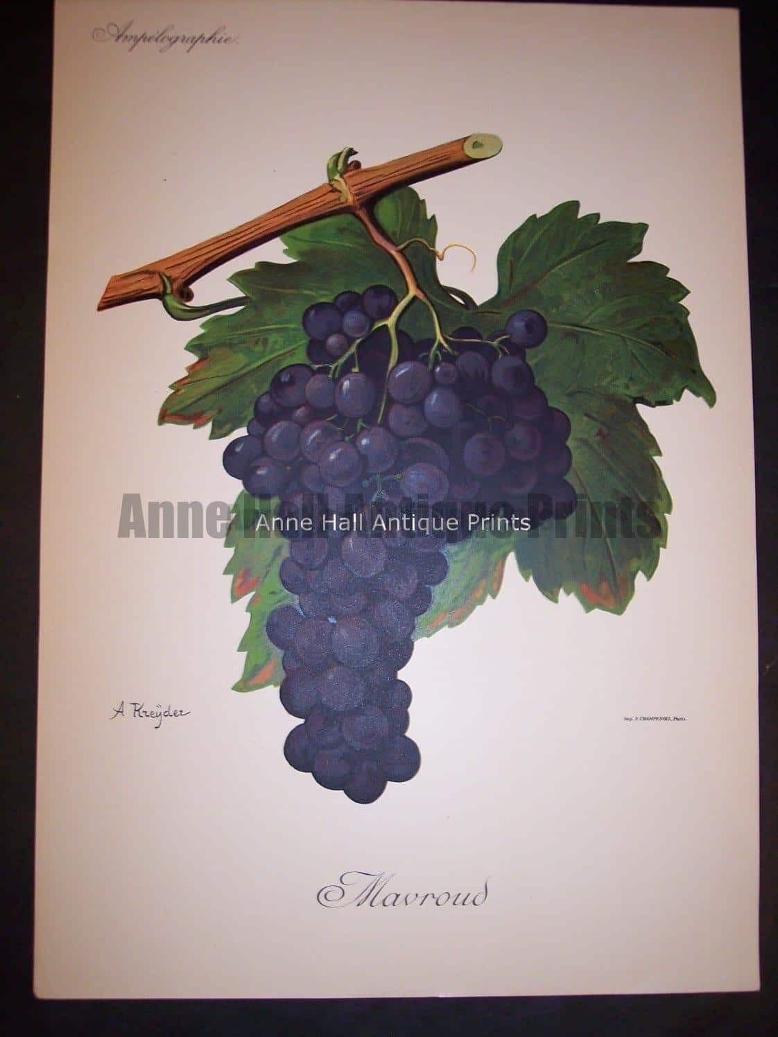 Viticulture & Wine Grape chromolithographs. Produced in France for Ampelographie in 1897.