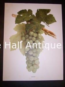 Grapes New York 9635