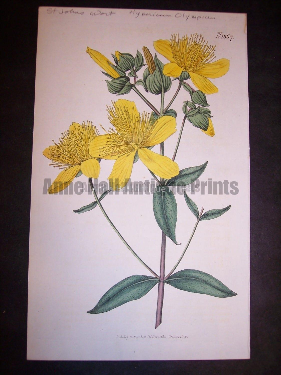 Herbs and Spices St. John's Wort