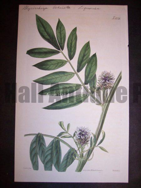 Herbs Spices Liquorice 2