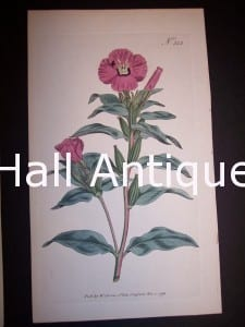 Pink Flower 352