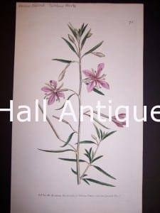 Narrow leaved Tuillow Herb 76