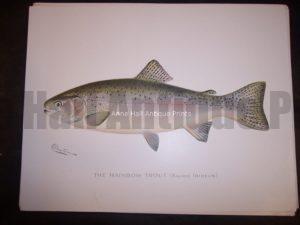 Denton Rainbow Trout