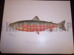 Denton Sunapee Trout or American Saibling