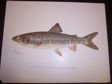 Denton Lake Trout