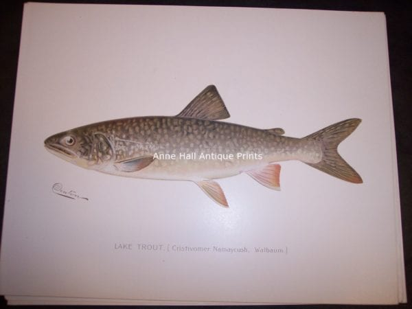 Denton Lake Trout