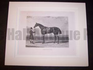Horses Equine Horse Engraving 9756