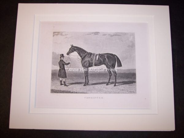 Horses Equine Horse Engraving 9756