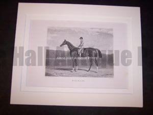 Horses Equine Horse Engraving 9758