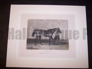Horses Equine Horse Engraving 9759