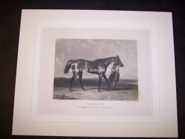 Horses Equine Horse Engraving 9759