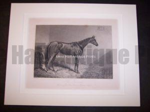 Horses Equine Horse Engraving 9760
