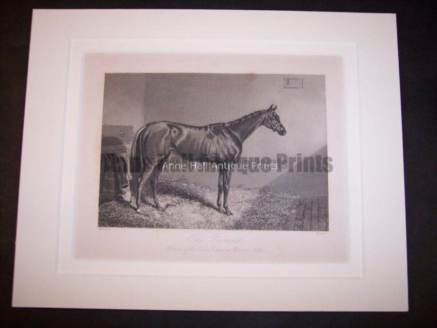 Horses Equine Horse Engraving 9760