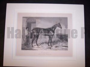 Horses Equine Horse Engraving 9762