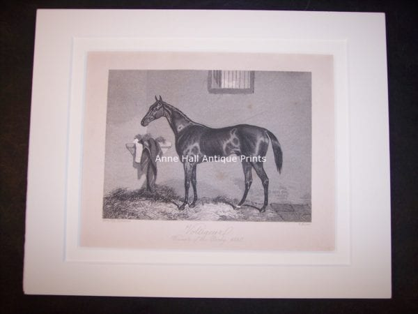 Horses Equine Horse Engraving 9762