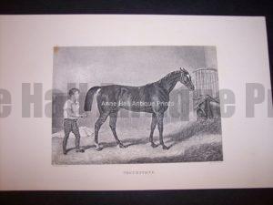 Horses Equine Horse Engraving 9763
